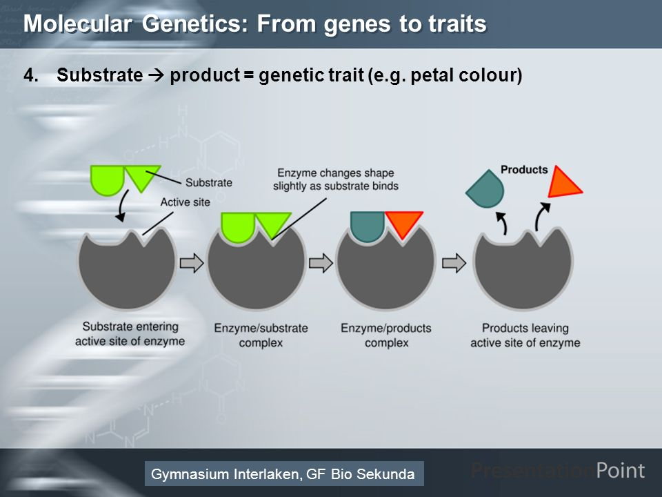 Molecular Genetics: From genes to traits