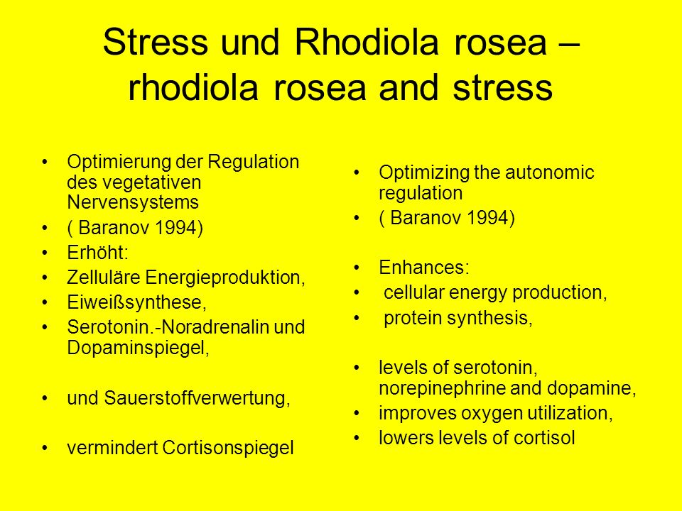 Stress und Rhodiola rosea – rhodiola rosea and stress