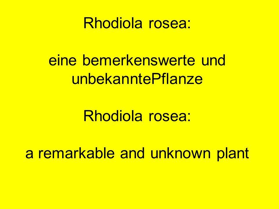 Rhodiola rosea: eine bemerkenswerte und unbekanntePflanze Rhodiola rosea: a remarkable and unknown plant