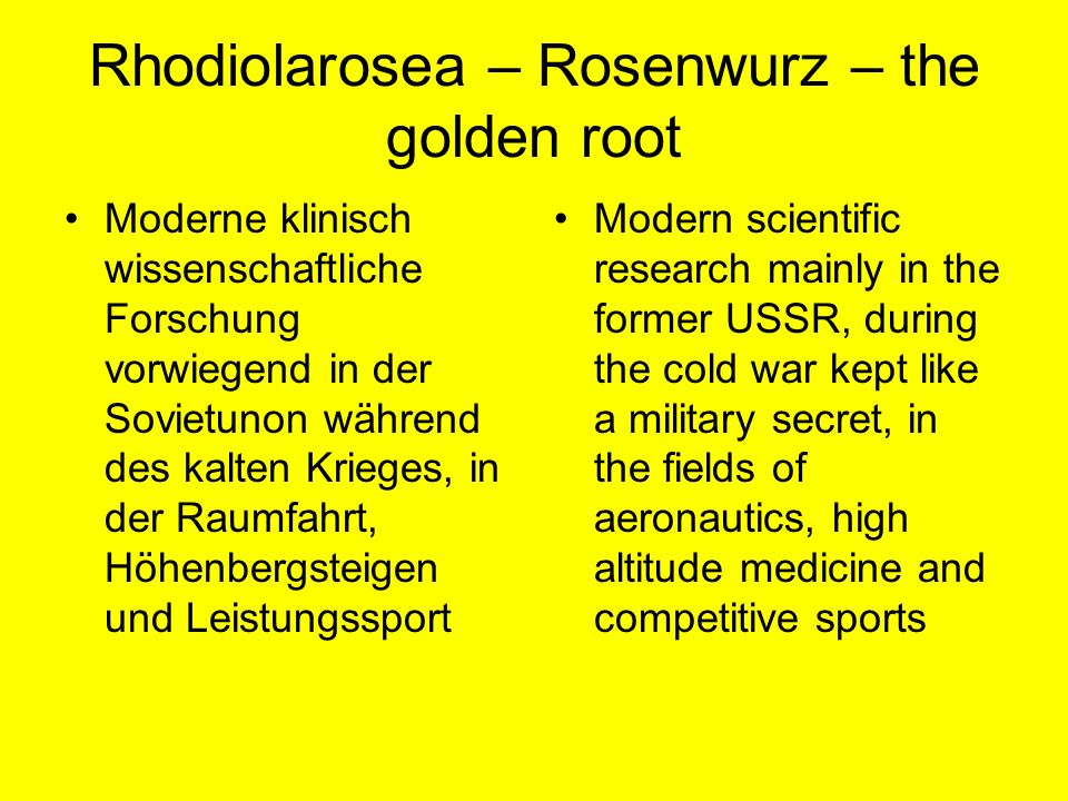 Rhodiolarosea – Rosenwurz – the golden root