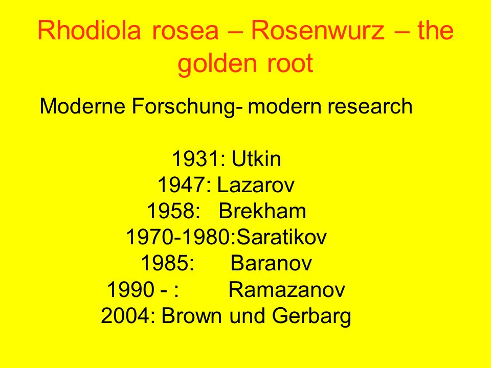 Rhodiola rosea – Rosenwurz – the golden root