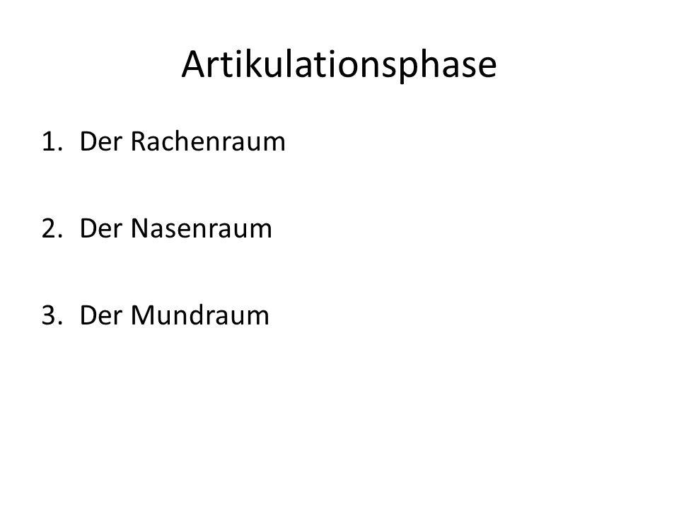 Artikulationsphase Der Rachenraum Der Nasenraum Der Mundraum