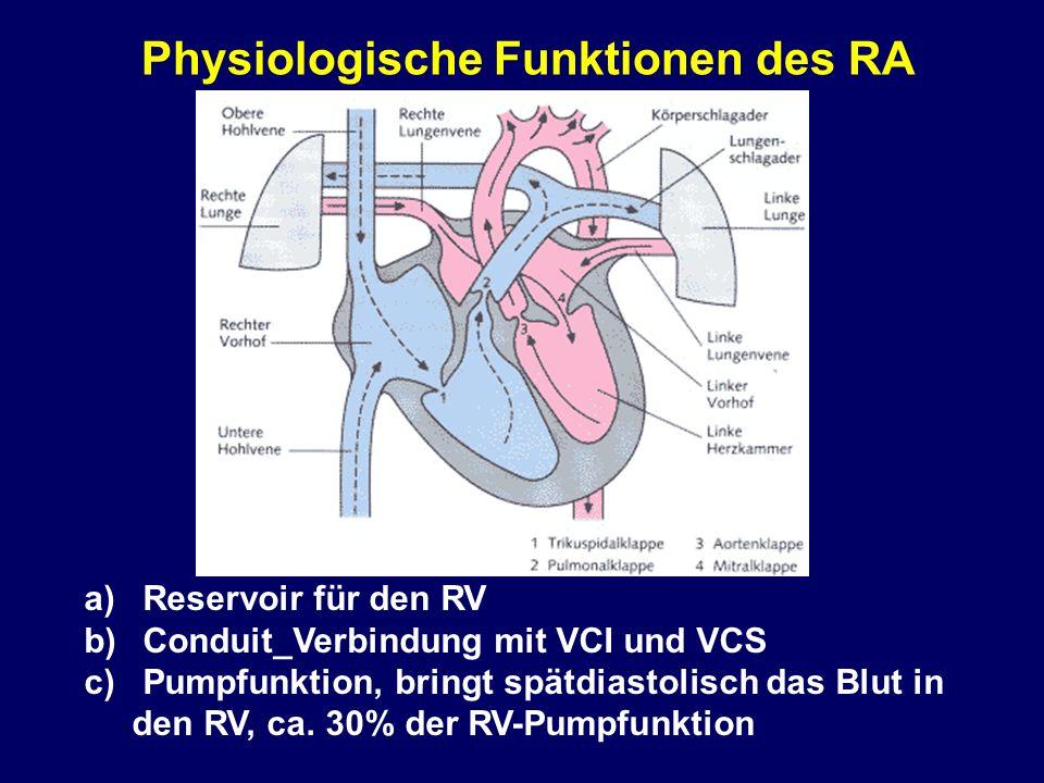 Physiologische Funktionen des RA