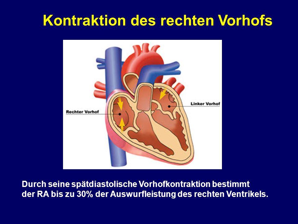 rechter ventrikel normwerte