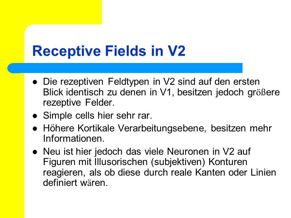 Receptive Fields in V2 Die rezeptiven Feldtypen in V2 sind auf den ersten Blick identisch zu denen in V1, besitzen jedoch größere rezeptive Felder.