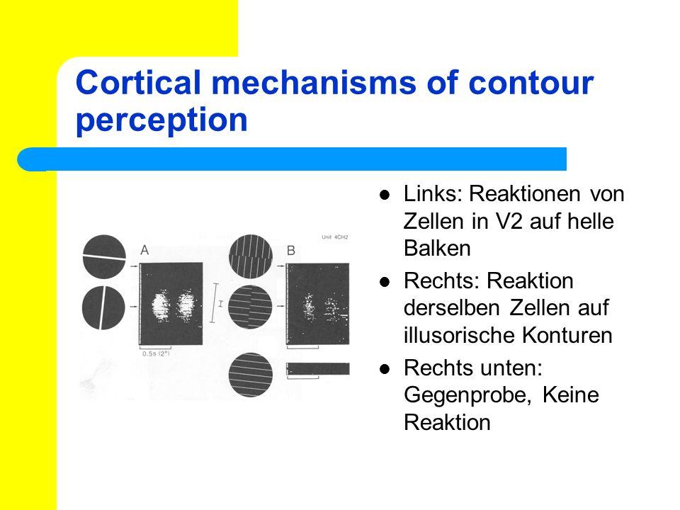 Cortical mechanisms of contour perception