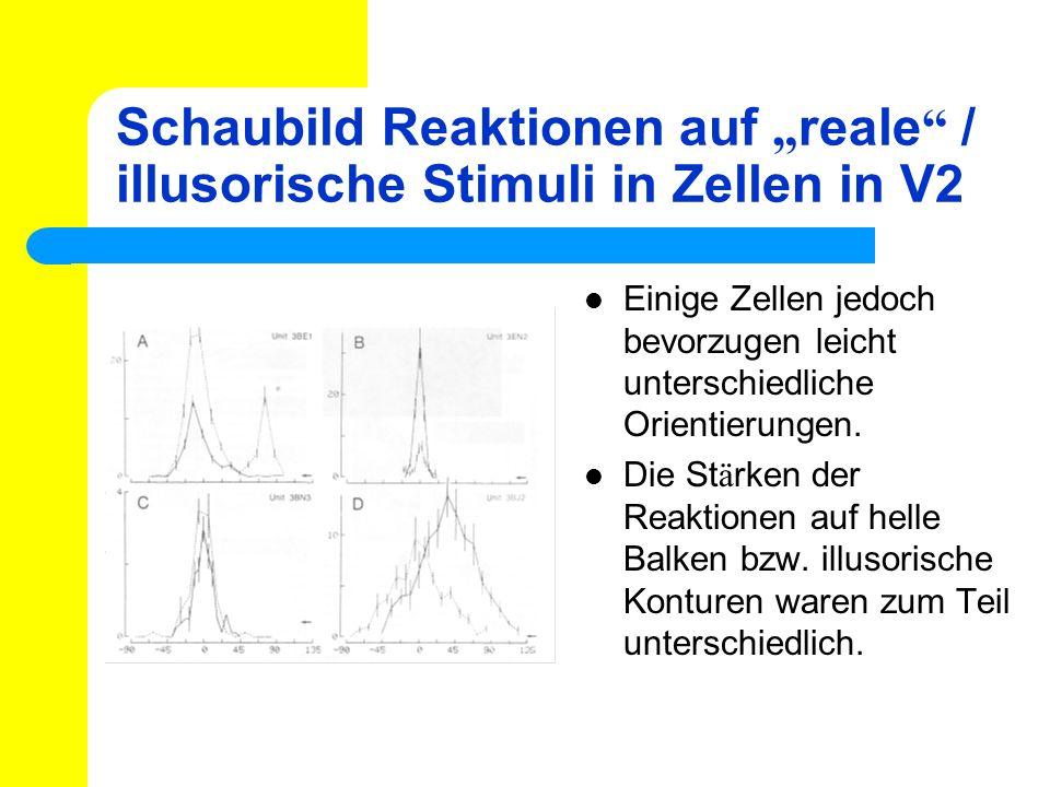 """Schaubild Reaktionen auf """"reale / illusorische Stimuli in Zellen in V2"""
