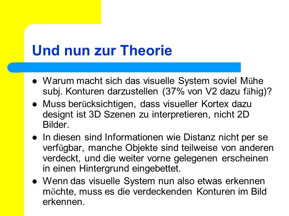 Und nun zur Theorie Warum macht sich das visuelle System soviel Mühe subj. Konturen darzustellen (37% von V2 dazu fähig)