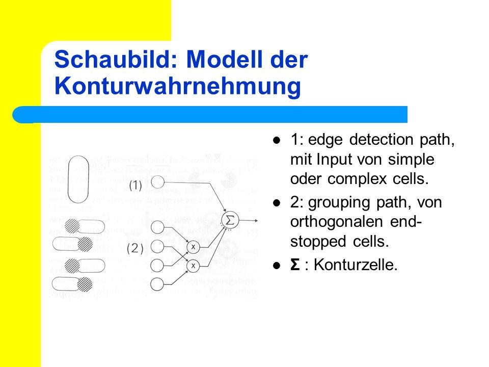Schaubild: Modell der Konturwahrnehmung