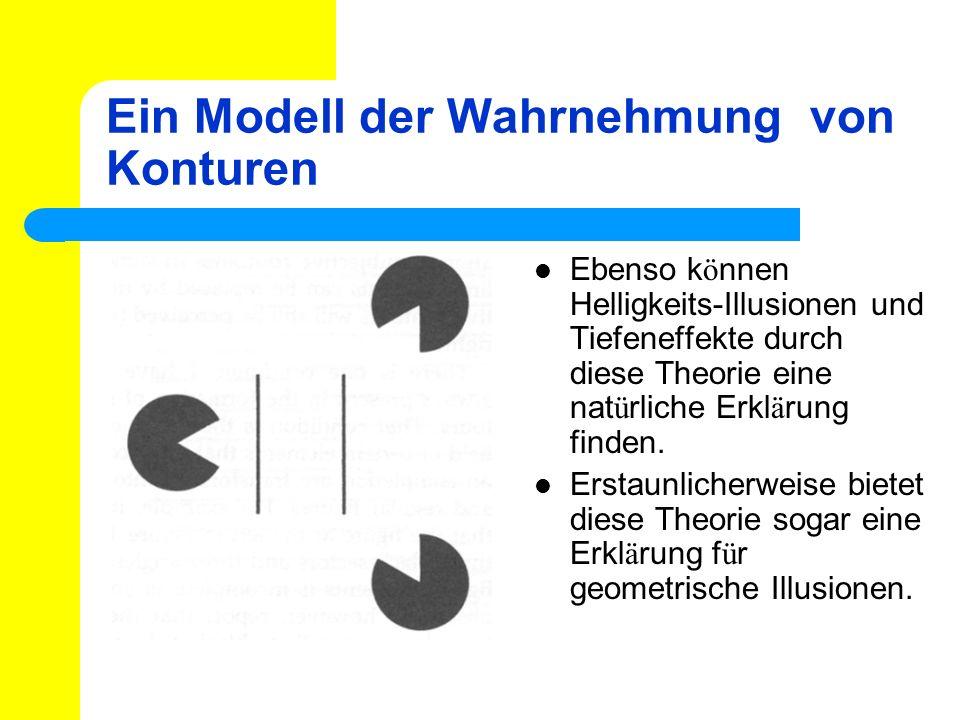 Ein Modell der Wahrnehmung von Konturen