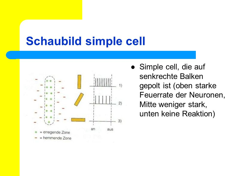 Schaubild simple cell