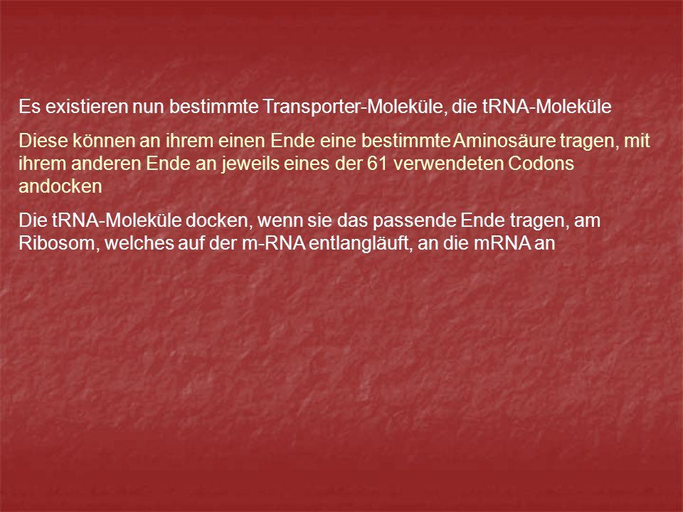 Es existieren nun bestimmte Transporter-Moleküle, die tRNA-Moleküle