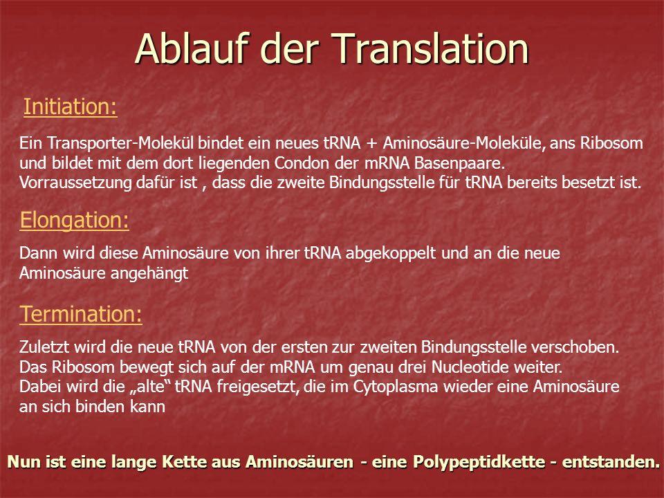Ablauf der Translation
