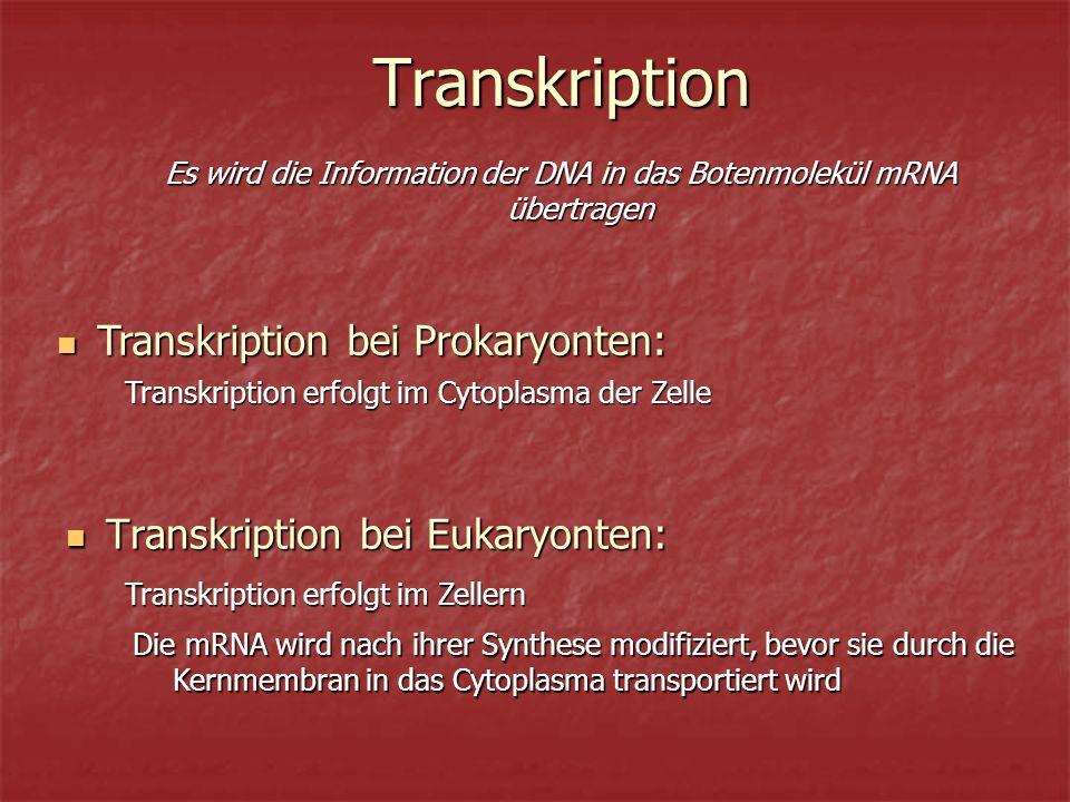 Es wird die Information der DNA in das Botenmolekül mRNA übertragen