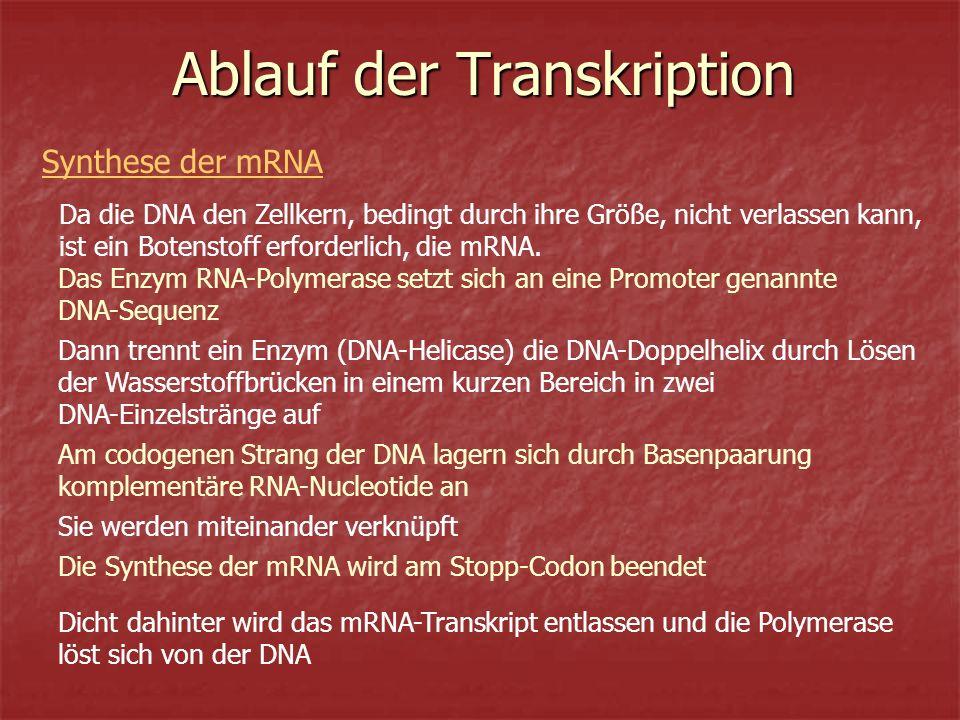 Ablauf der Transkription