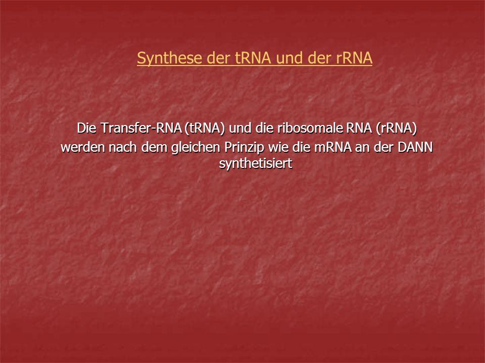 Synthese der tRNA und der rRNA