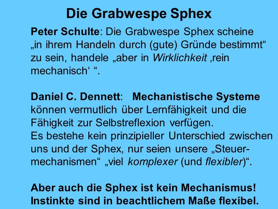 Die Grabwespe Sphex Peter Schulte: Die Grabwespe Sphex scheine