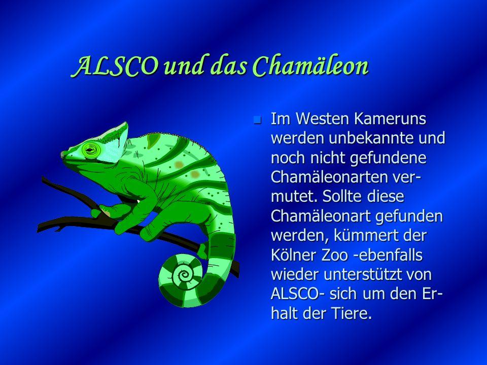 ALSCO und das Chamäleon