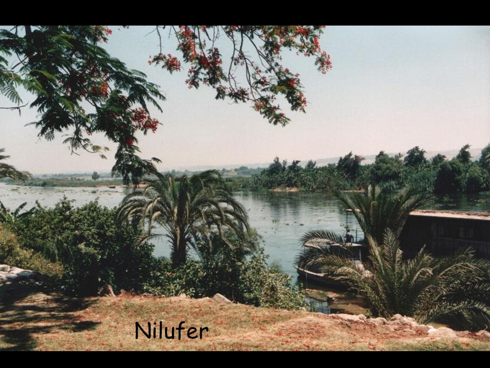Nilufer