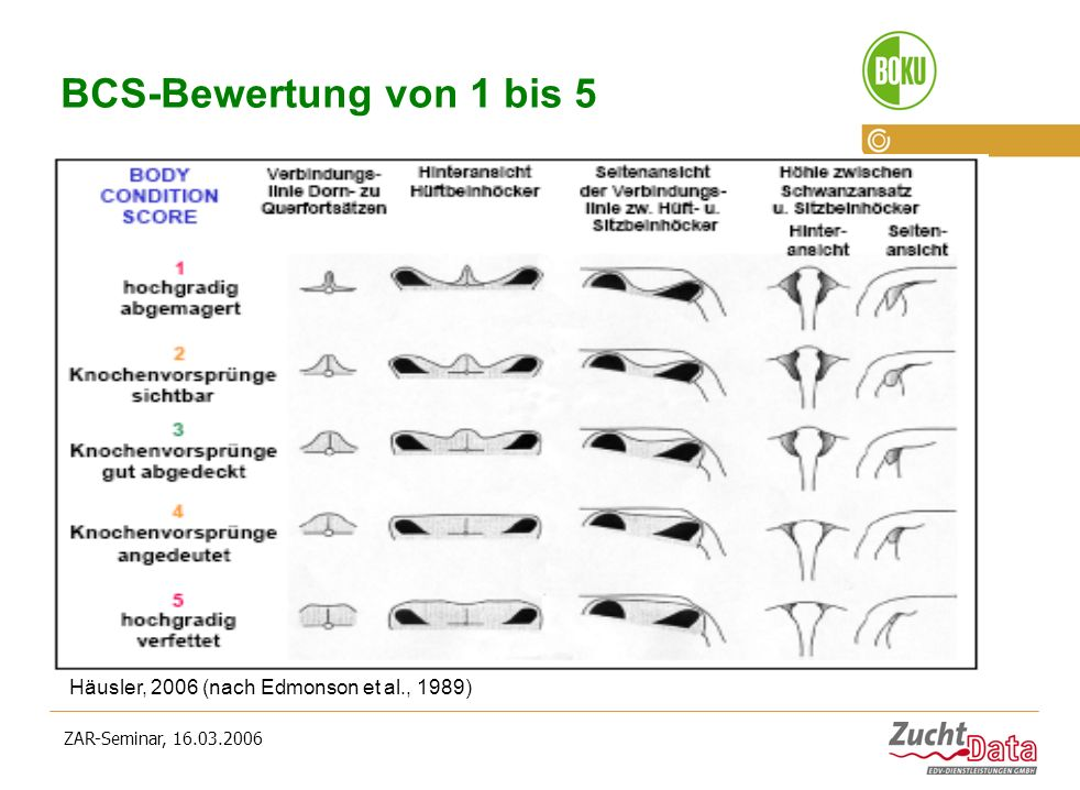 BCS-Bewertung von 1 bis 5 Häusler, 2006 (nach Edmonson et al., 1989)