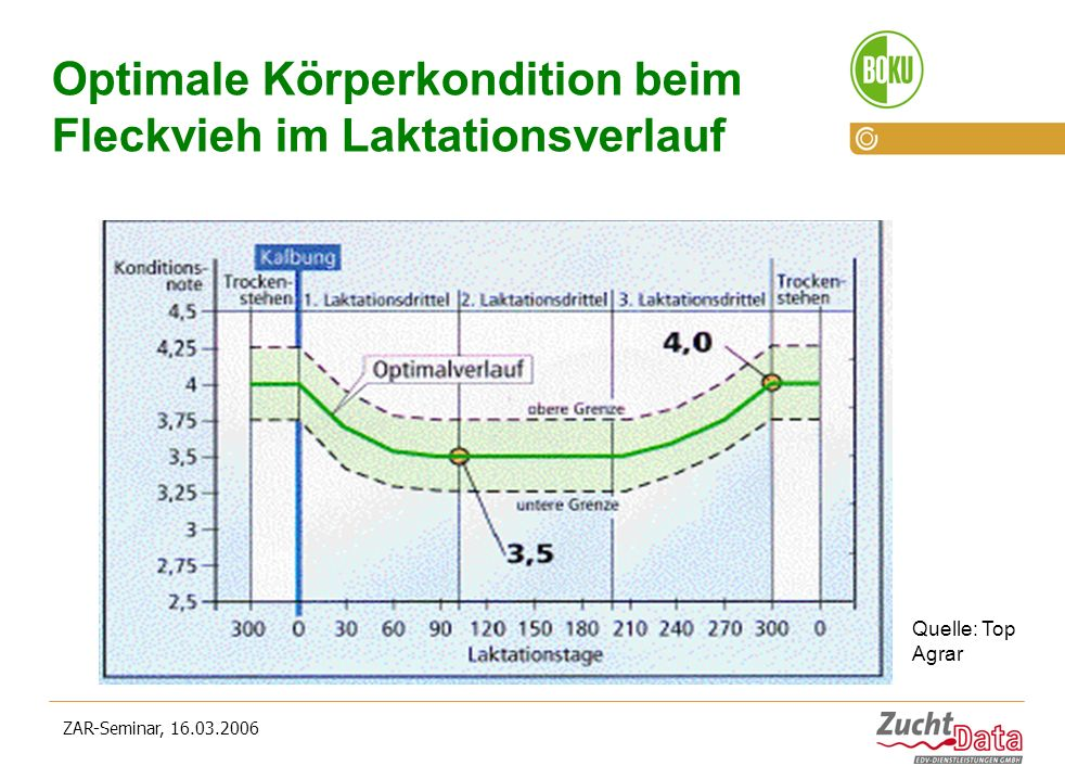 Optimale Körperkondition beim Fleckvieh im Laktationsverlauf
