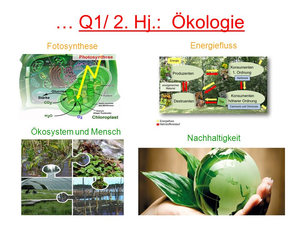 … Q1/ 2. Hj.: Ökologie Fotosynthese Energiefluss Ökosystem und Mensch