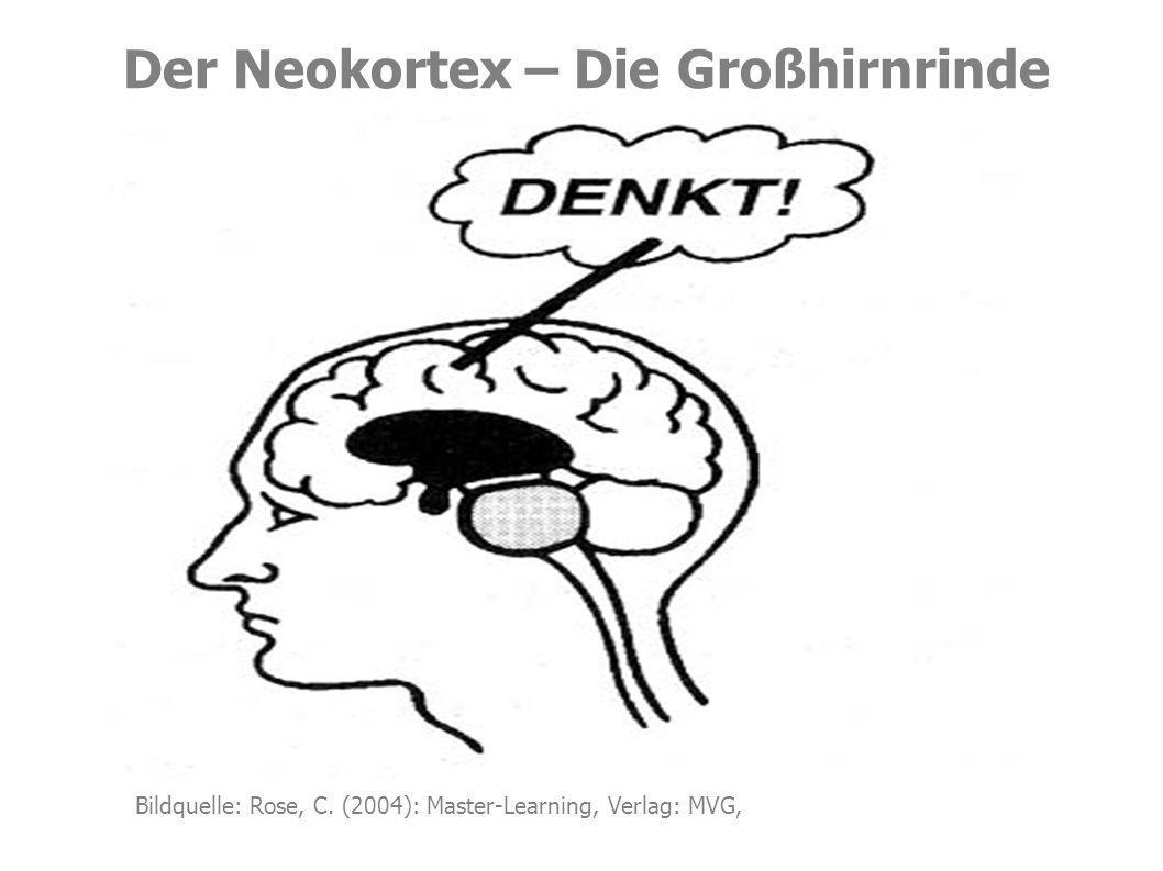 Der Neokortex – Die Großhirnrinde