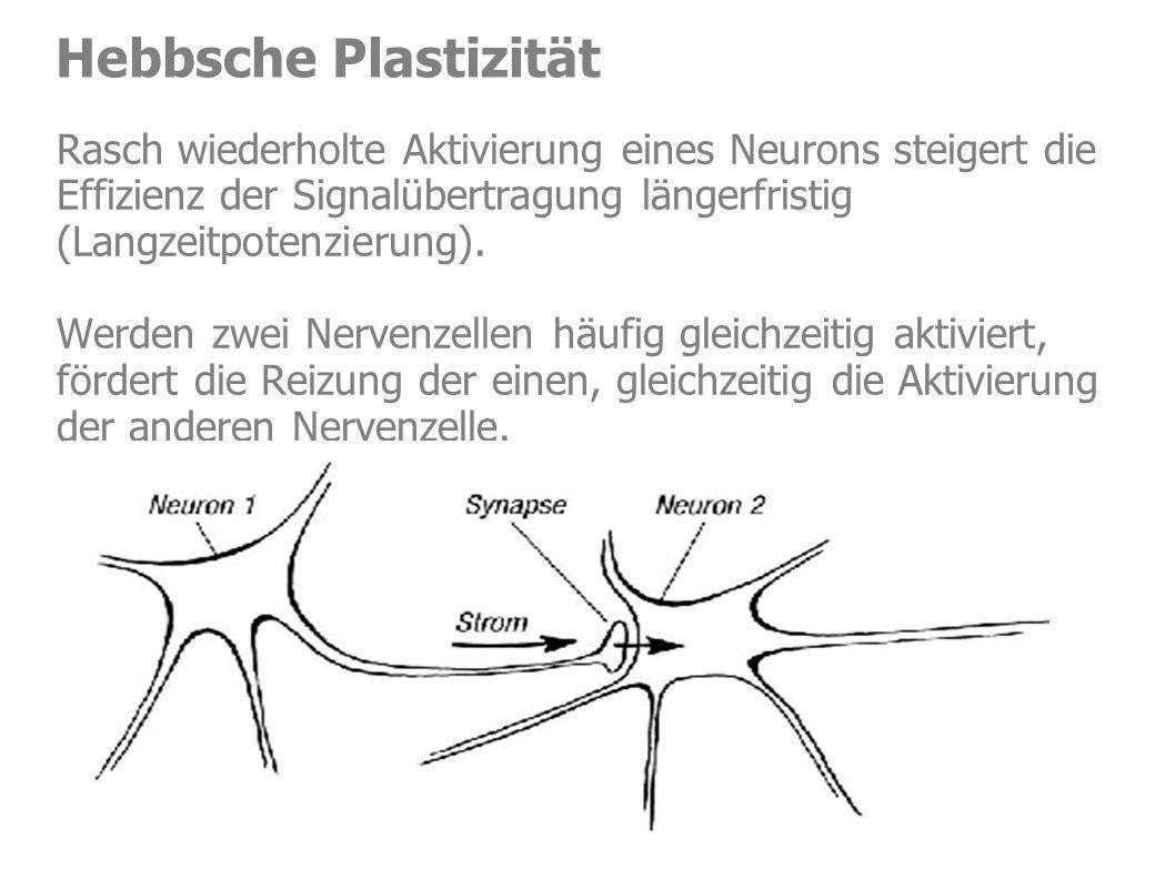 Rasch wiederholte Aktivierung eines Neurons steigert die