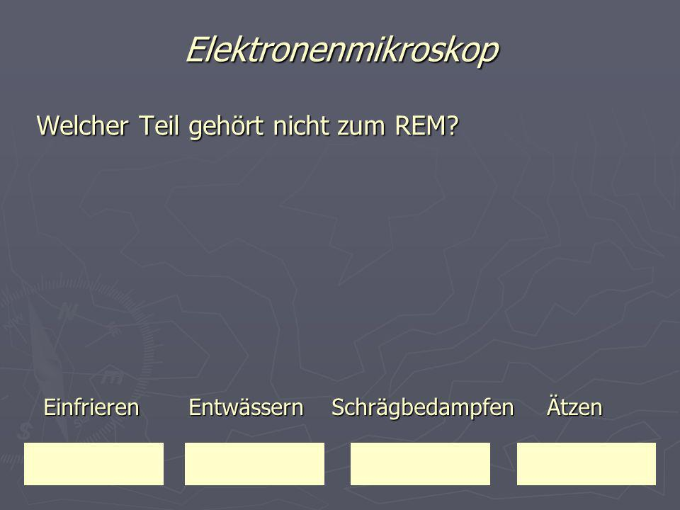 Elektronenmikroskop Welcher Teil gehört nicht zum REM
