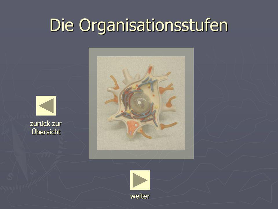 Die Organisationsstufen