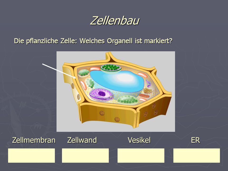 Zellenbau Zellmembran Zellwand Vesikel ER