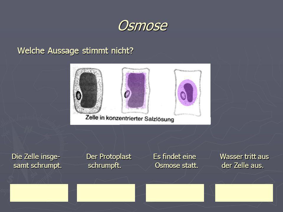 Osmose Die Zelle insge-samt schrumpt. Der Protoplast schrumpft.
