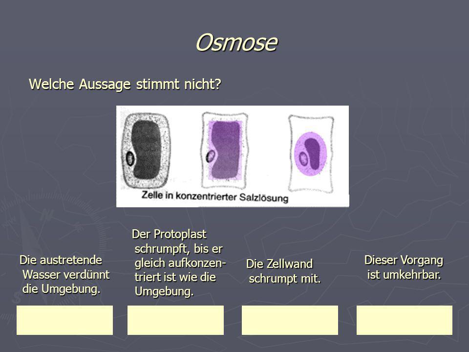 Osmose Welche Aussage stimmt nicht Der Protoplast schrumpft, bis er gleich aufkonzen-triert ist wie die Umgebung.