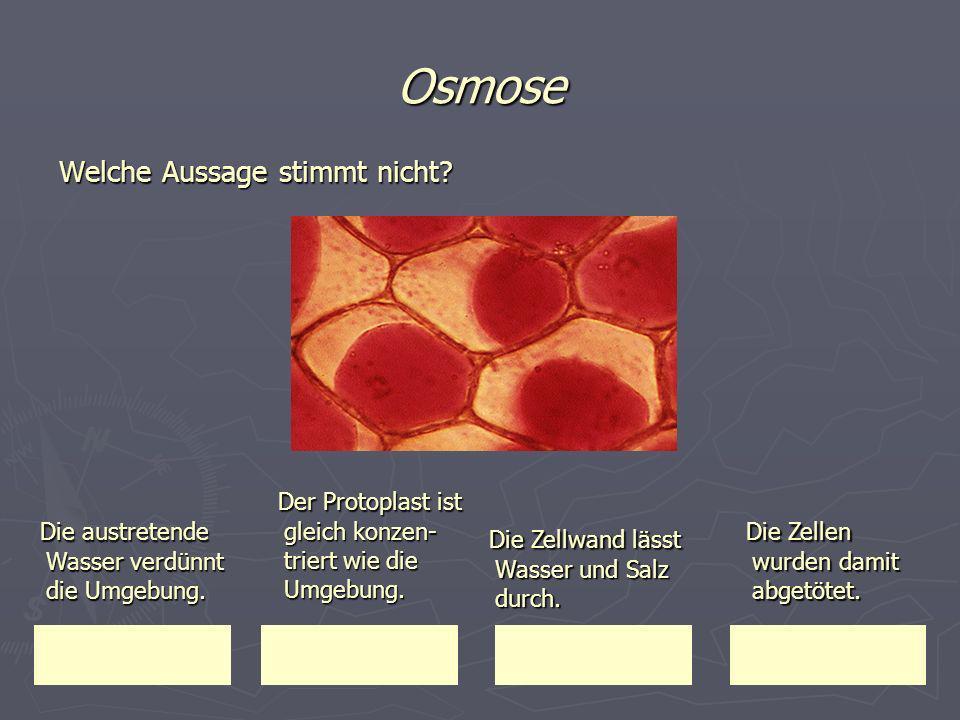Osmose Der Protoplast ist gleich konzen-triert wie die Umgebung.