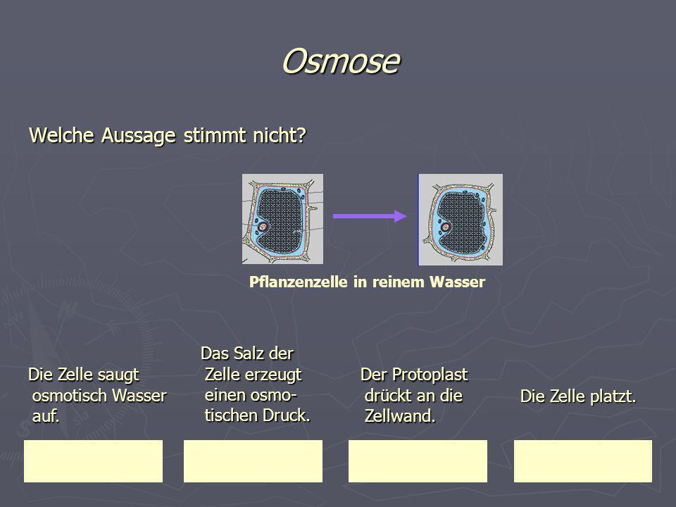 Osmose Das Salz der Zelle erzeugt einen osmo-tischen Druck.