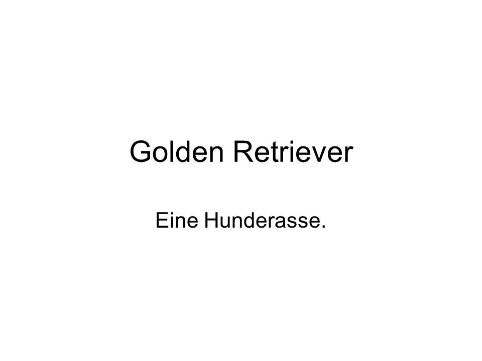 Golden Retriever Eine Hunderasse.