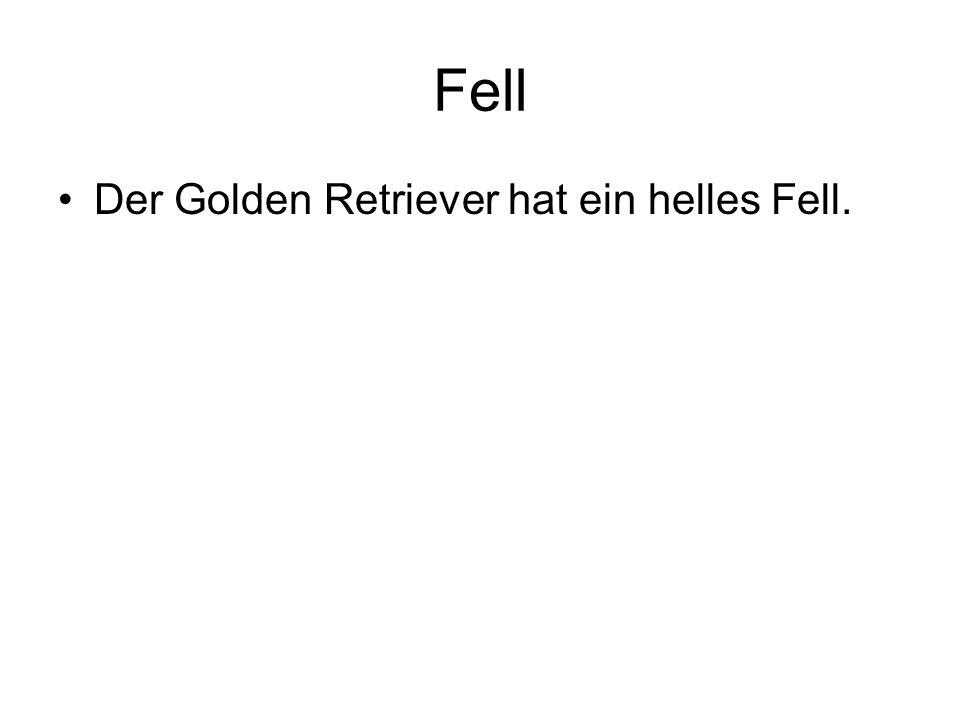 Fell Der Golden Retriever hat ein helles Fell.