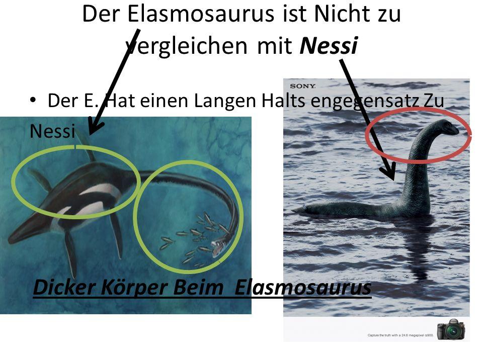 Der Elasmosaurus ist Nicht zu vergleichen mit Nessi