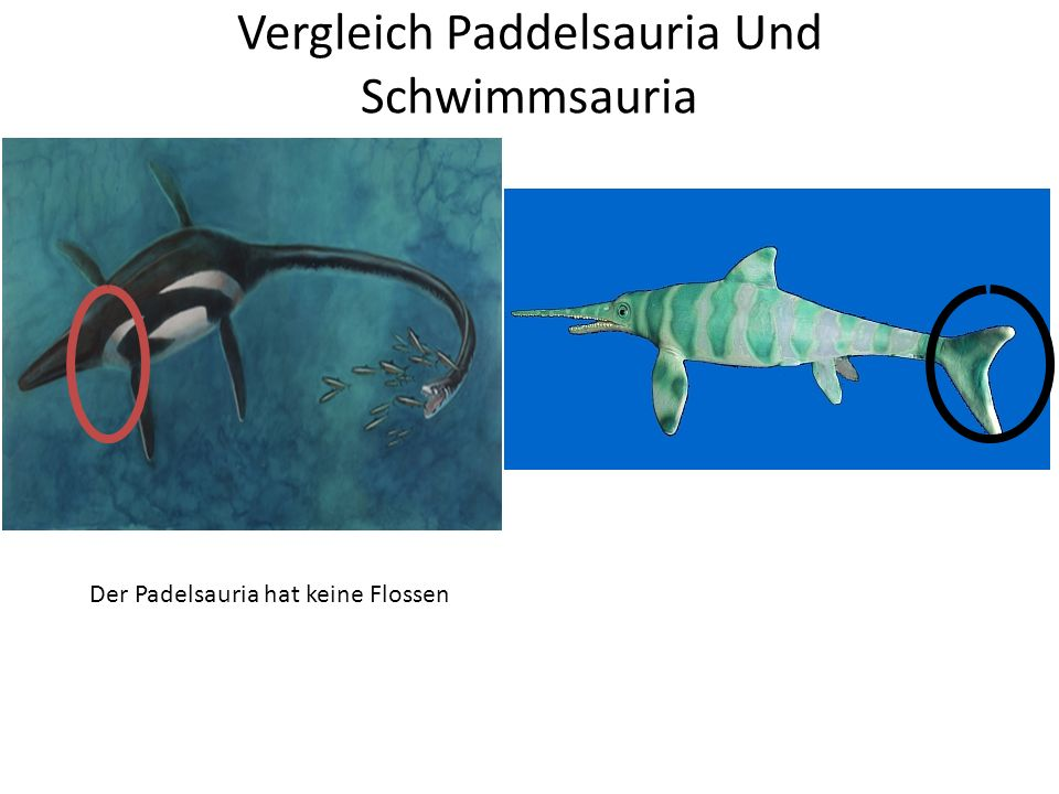 Vergleich Paddelsauria Und Schwimmsauria