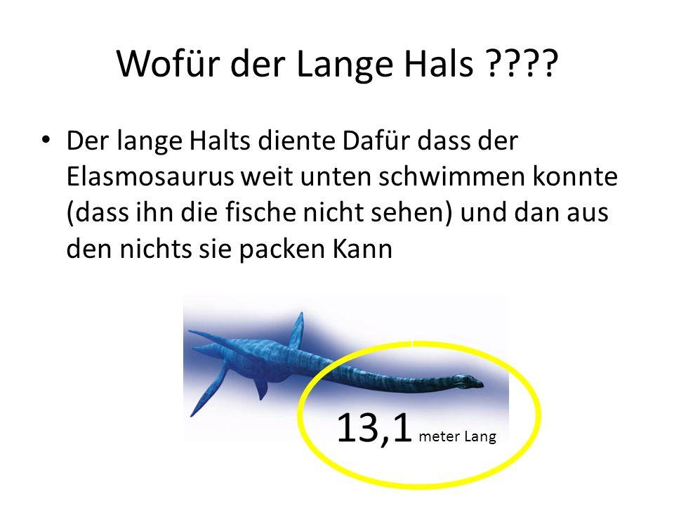 13,1 meter Lang Wofür der Lange Hals