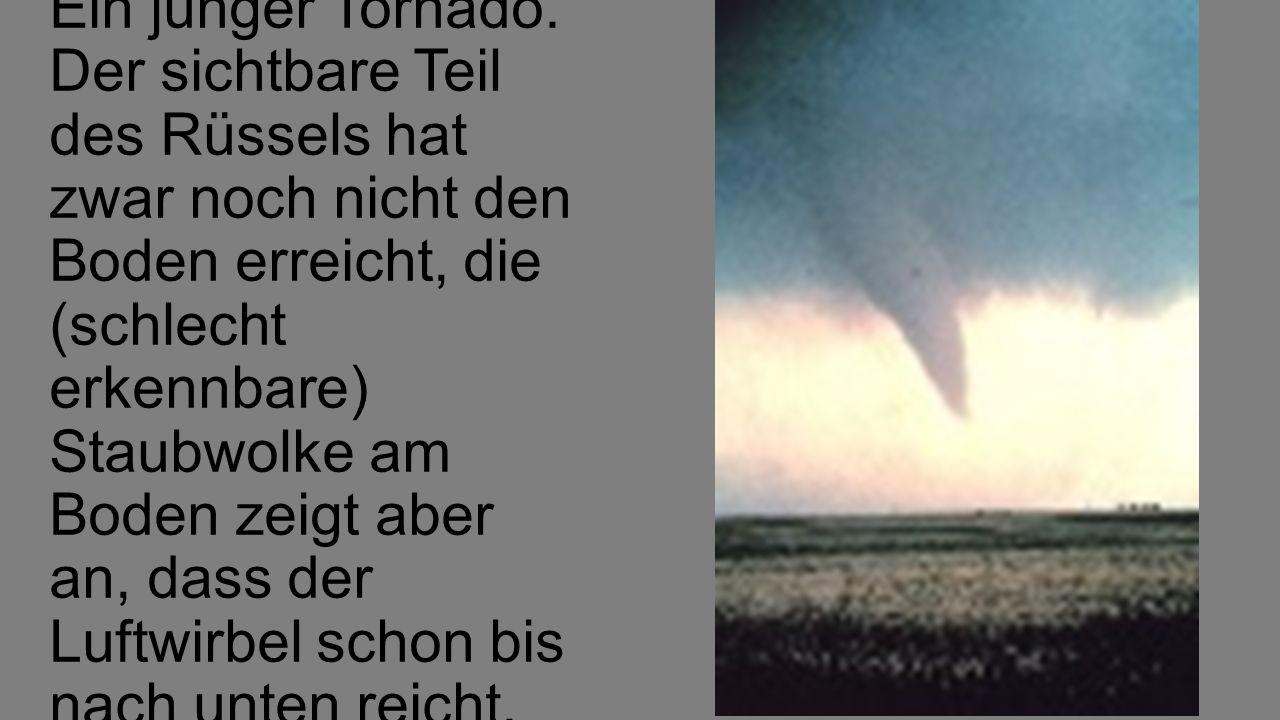 Ein junger Tornado.