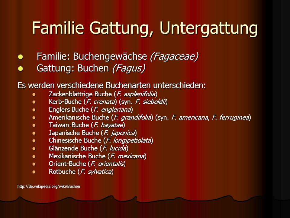 Familie Gattung, Untergattung