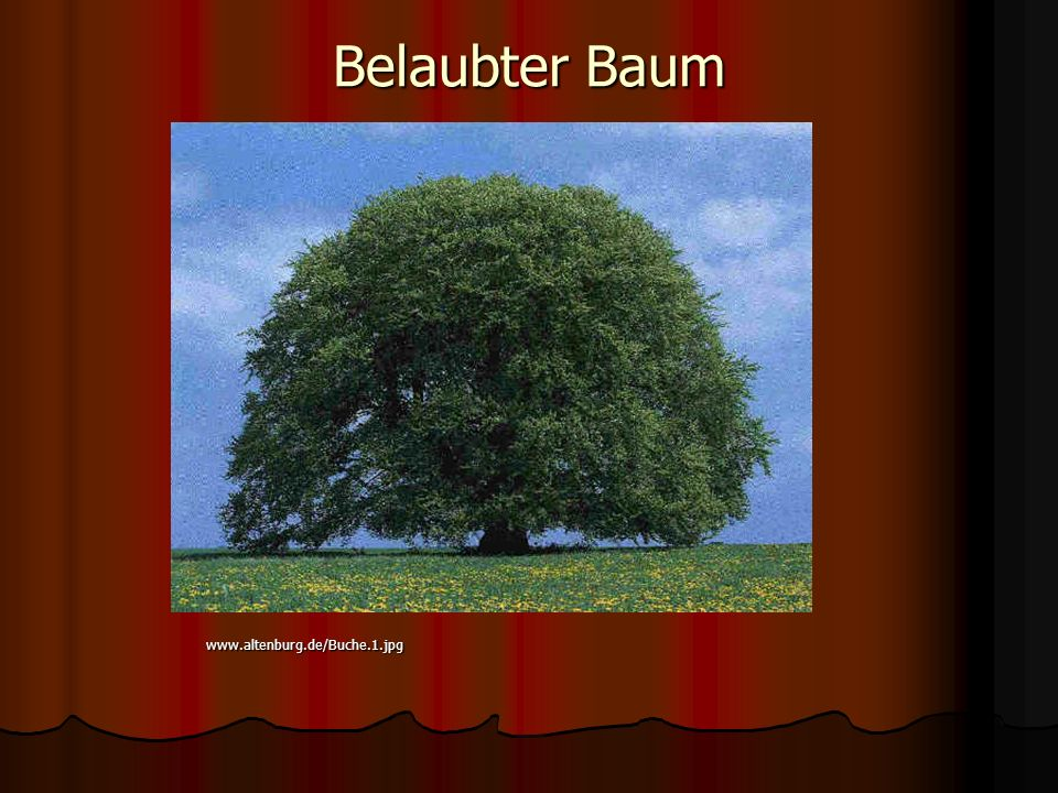 Belaubter Baum www.altenburg.de/Buche.1.jpg