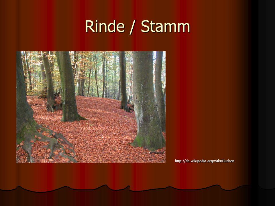 Rinde / Stamm http://de.wikipedia.org/wiki/Buchen