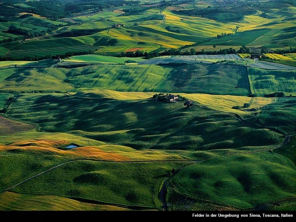 Felder in der Umgebung von Siena, Toscana, Italien