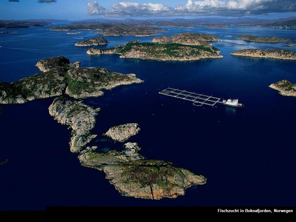 Fischzucht in Boknafjorden, Norwegen