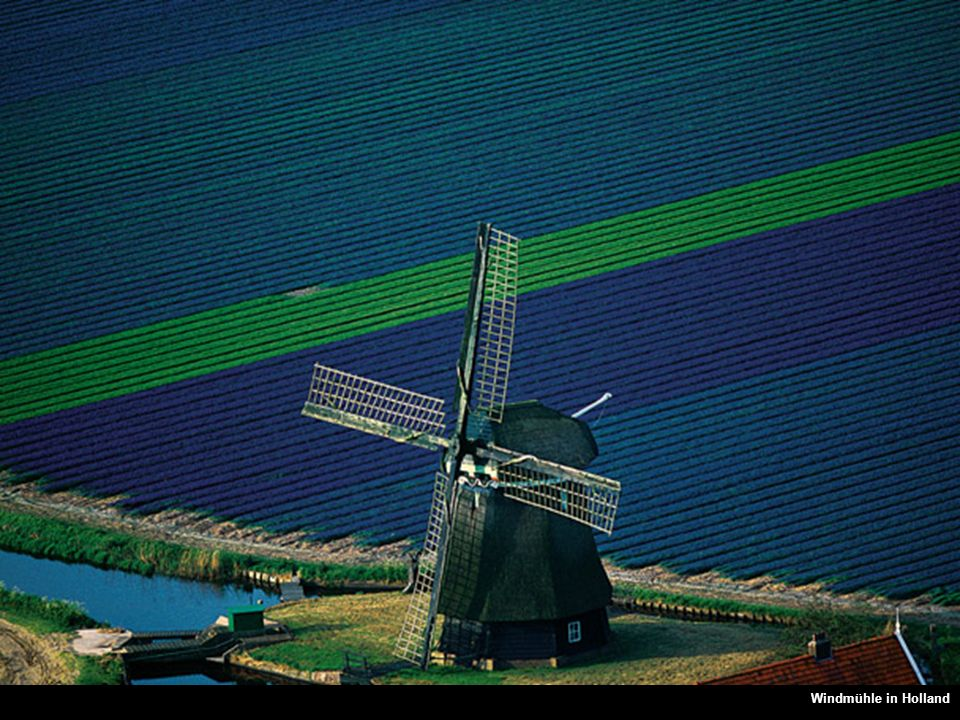 Windmühle in Holland Molino en medio de los campos, Países Bajos