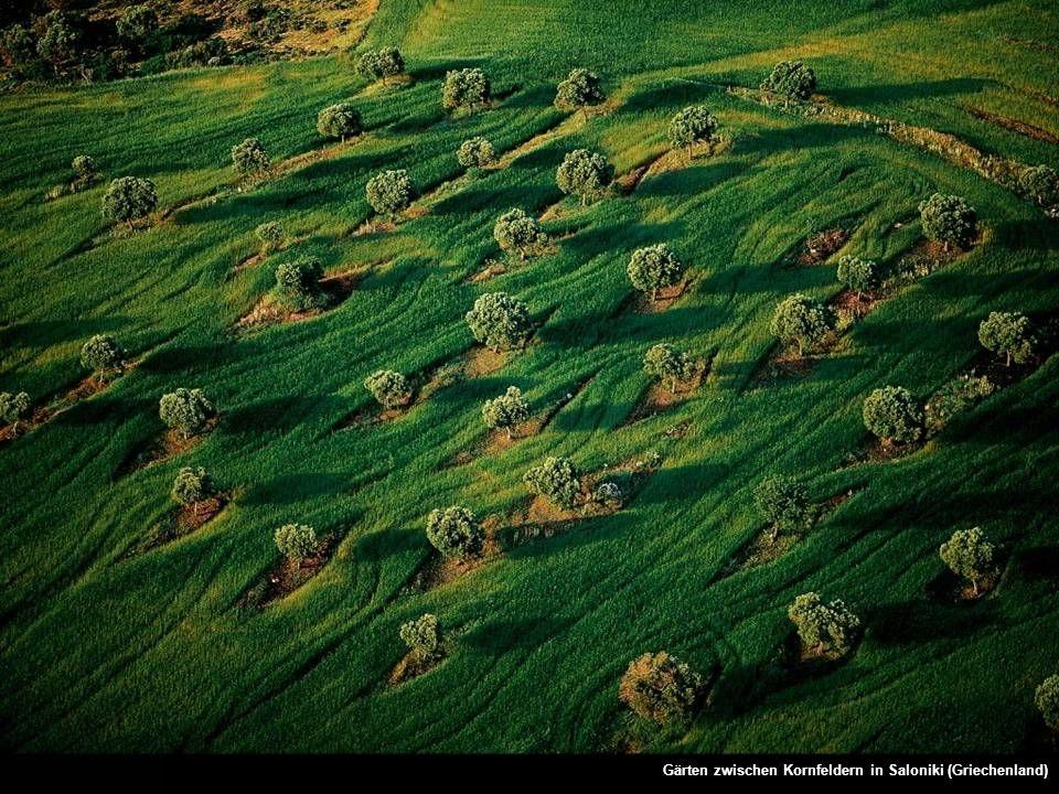 Gärten zwischen Kornfeldern in Saloniki (Griechenland)