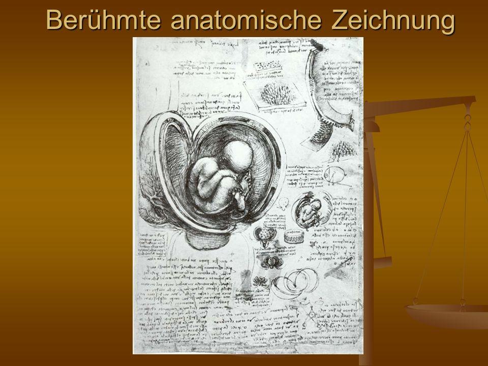 Berühmte anatomische Zeichnung