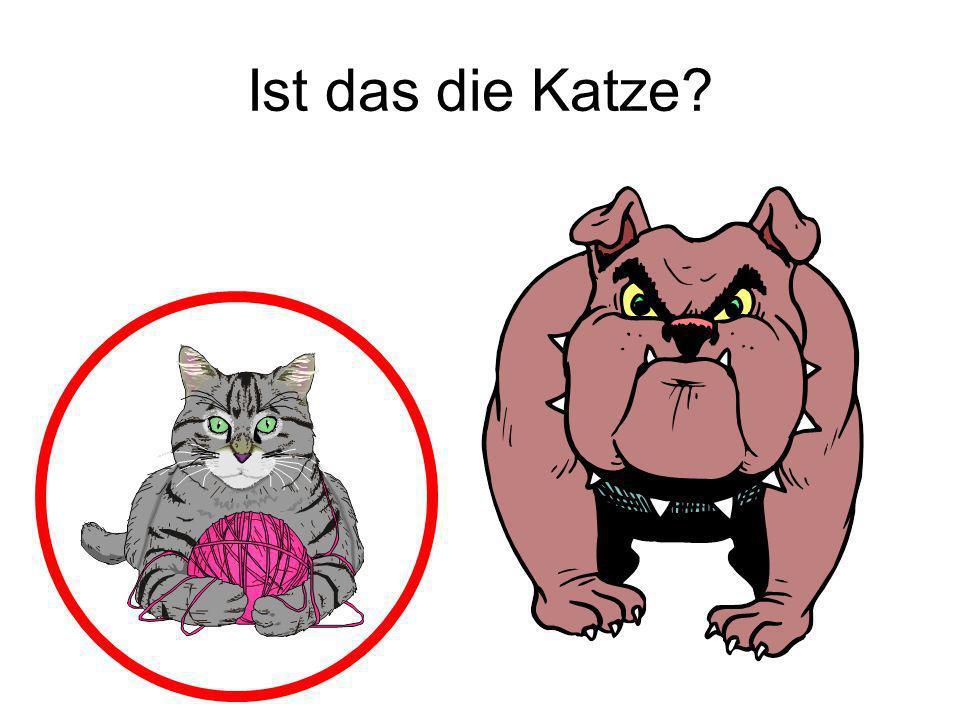 Ist das die Katze Ja!